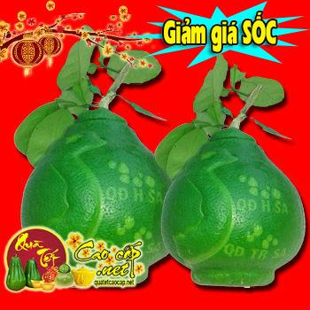 Bưởi Hồ Lô Bản Đồ Việt Nam